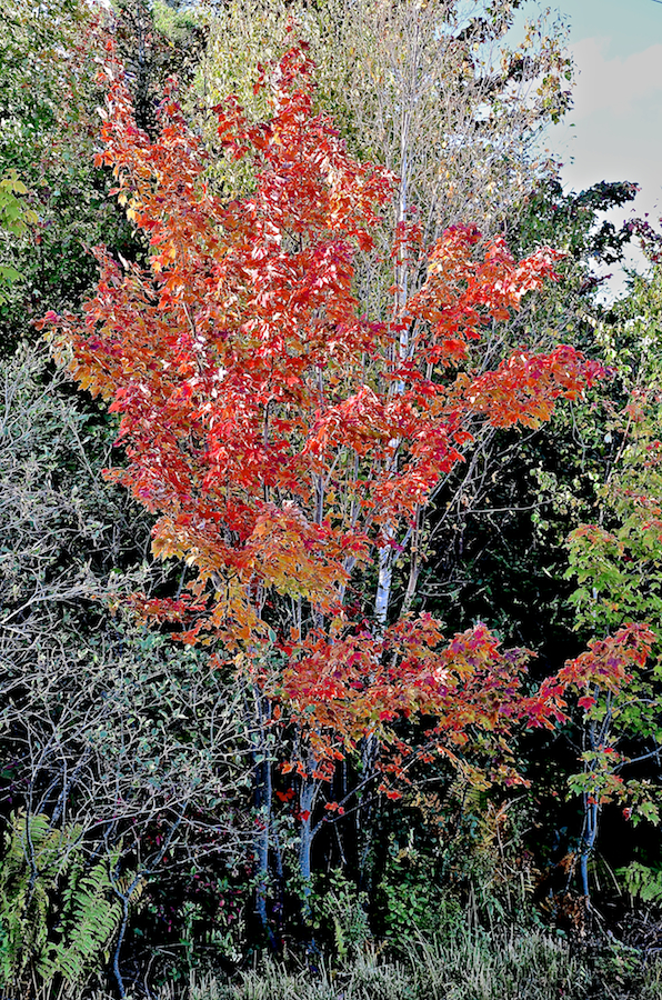 the red tree essay